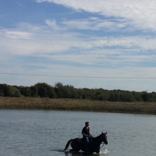 Horseback rider takes AQHA gelding into the water of our lake