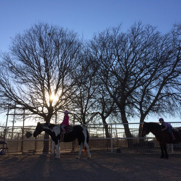 Two horses meandering around a hunter jumper arena in Hutt Texas horseback riding facility with large fall trees, leafless in the background