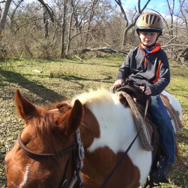 young boy rides his trusted mount for the day, Teddy, a brown and white paint gelding used as a hunter jumper horse at a riding facility in Texas