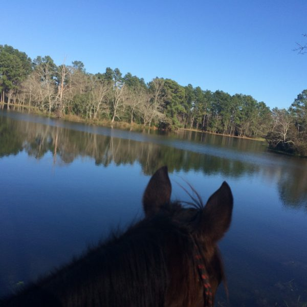 Between the ears shot with bay gelding, Cat, standing in front of the blue pond at Pundt Park in Houston on our first trail ride there