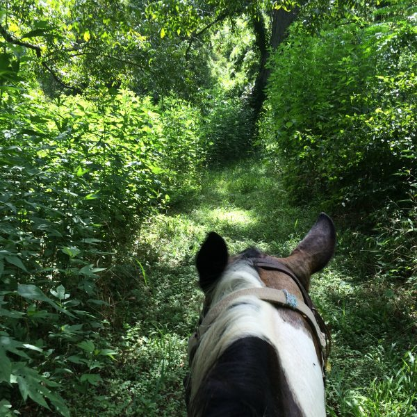 life between the ears with Texas equine photographer mounted on Cocala Loca, our registered black and white paint mare surrounded by bright green foliage in spring on the river bank of San Antonio trail ride