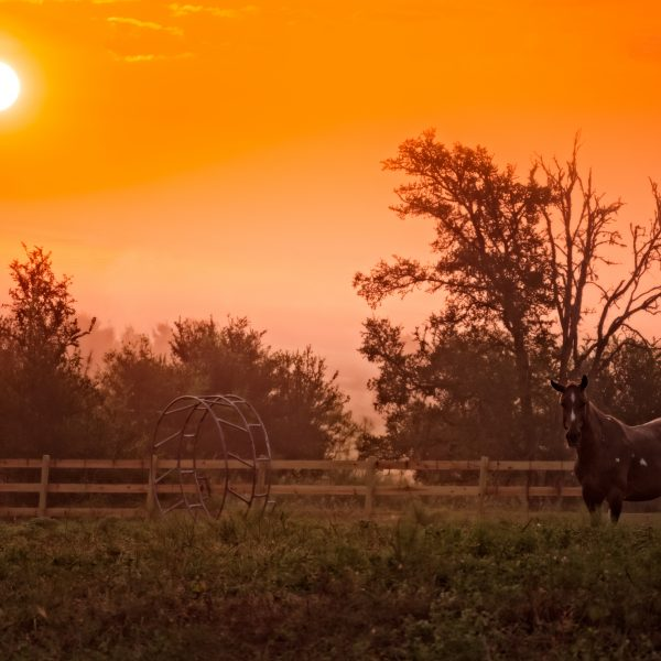 Located just 20 minutes from San Marcos, this shot capture the beauty of a Texas sunset at dusk.  Paint gelding, surf (for sale in Austin TX) is pictured on the right.  The brilliant sun is setting on the left.  Need more?  Check out that country wooden Kentucky Fence and take a deep breath.  This is Tesxas, y'all.