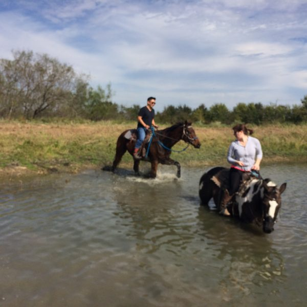 horses in the lake at our horse rental facility in San Marcos