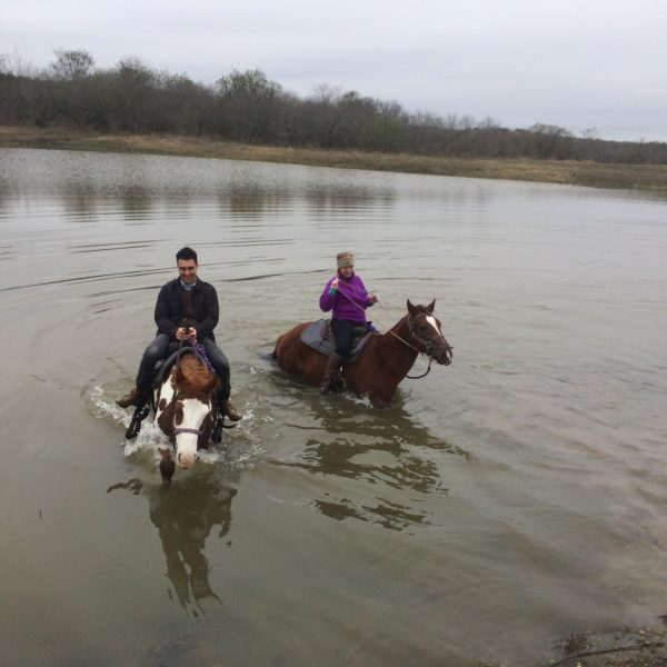 Texas dude ranch horseback Riders take the plunge into the lake on horseback, pictured here are Rocky our trust chestnut quarter horse and Annie, our paint mare who is currently bred