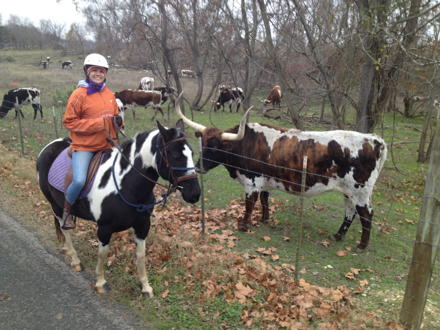 Black and white APHA mare for sale in Texas posing with spotted long horn on Round Rock trail ride