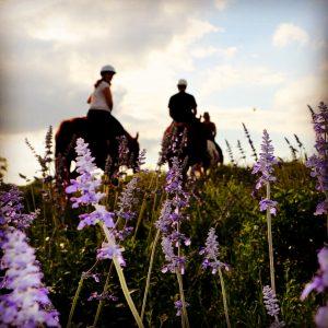 Purple Texas wildflowers dotting the ground on North Austin trail ride