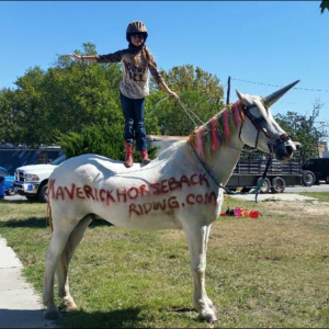 "youth equestrian stands atop rainbow unicorn, unofficial SXSW superstar, ""Maverick,"" our Percheron/Arabian cross"