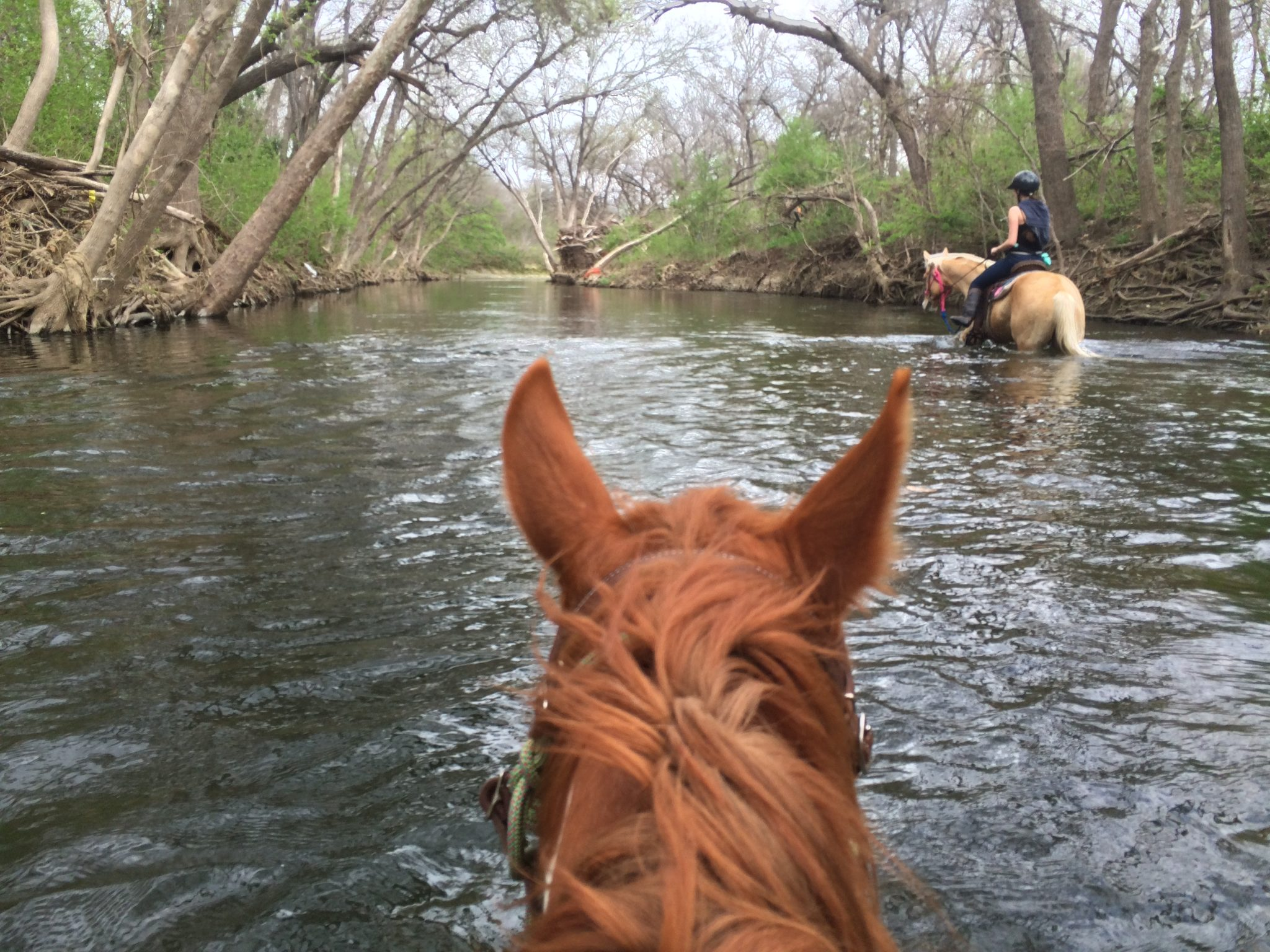 Summer Camp Maverick Horseback Riding