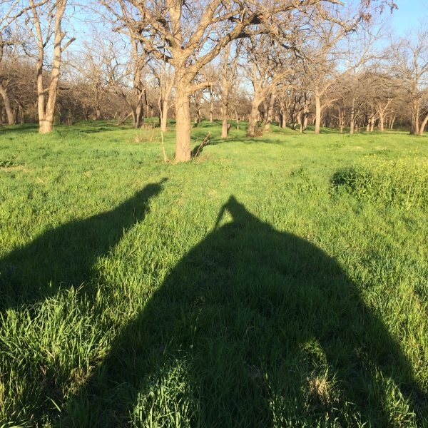 Shadows of horses taken from the saddle by Texas equine photographer, pictured on fresh green grass and outlined with trees agains a blue sky background