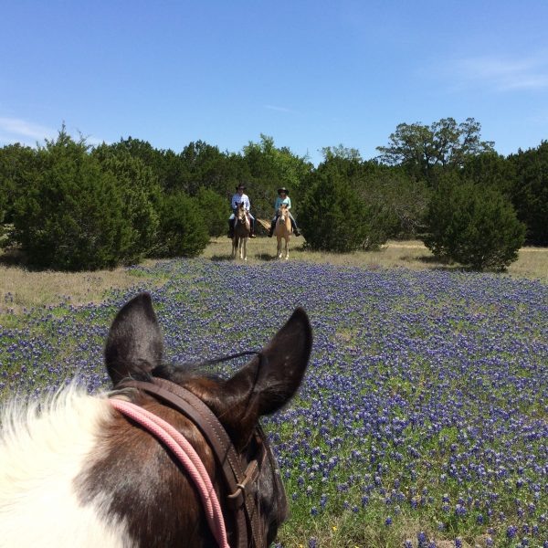 Couple shown in the background over a field of Blue Bonnets at Parrie Haynes Riding Ranch in Killeen, mounted on walking horses while Equine photographer Joan Marie MacCoy takes a between the ears shot from the back of her trusted paint mare, Coca