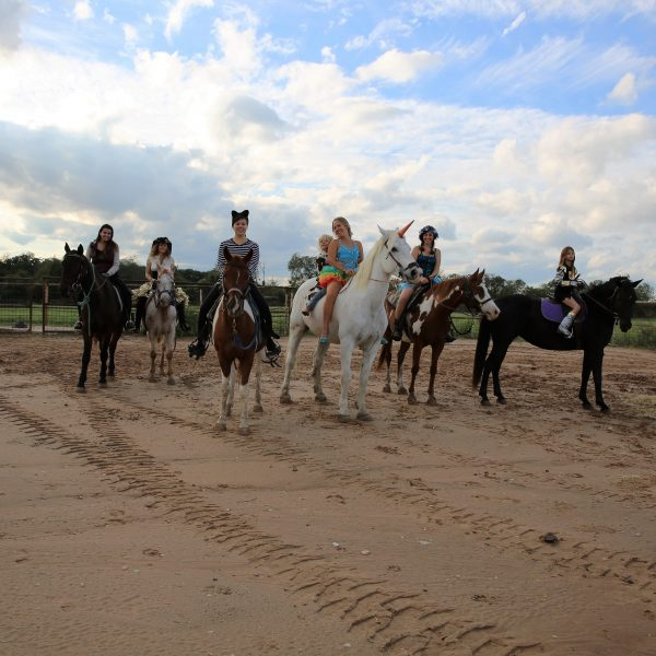at the far left is Cat our half hackney half arabian registered gelding with a rider dressed as a vampire, then a pirate on appaloosa gelding for sale and a cat riding a paint gelding, in the middle is MacCoy riding the infmaous Maverick dressed as a circus star with her son riding behind with a cow outfit, so he is literally a cowboy! then a fairy on sorrel and white paint mare, Annie up, and following that on the far right is child rider on black, dressed as a knight in shining armor,