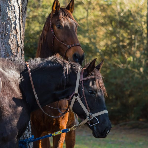 Trail riding horsemanship lessons offered at our Texas Dude Ranch in Central TX, near San Marcos