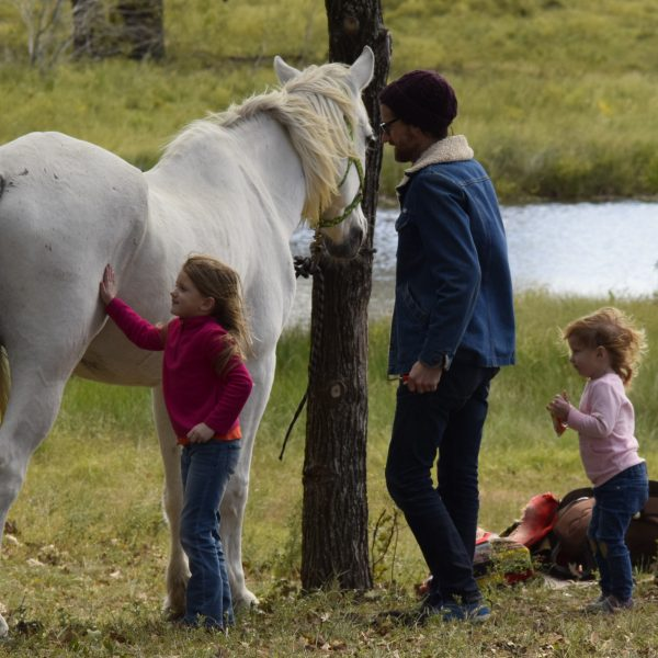 Father and two young daughter groom giant grey gelding, Maverick, at community event in Lockhart