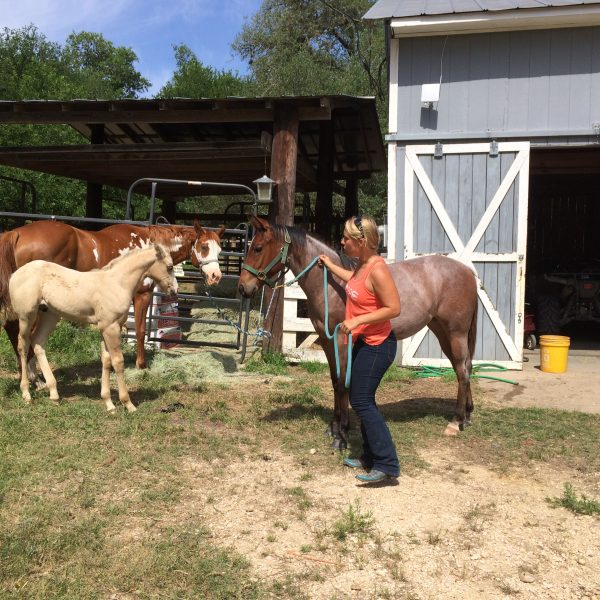 Horse trainer Jo Marie with 2018 foal and 2017 yearling