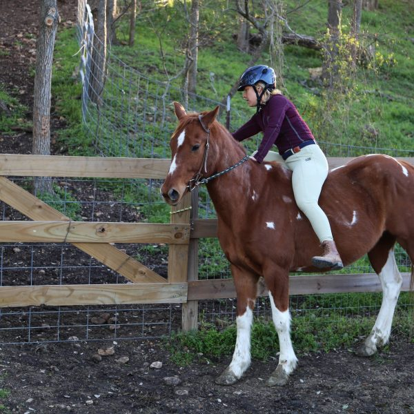 Smooth trotting and responsive paint horse for sale in Austin TX.  Used in lesson program for people looking for something fun to do.