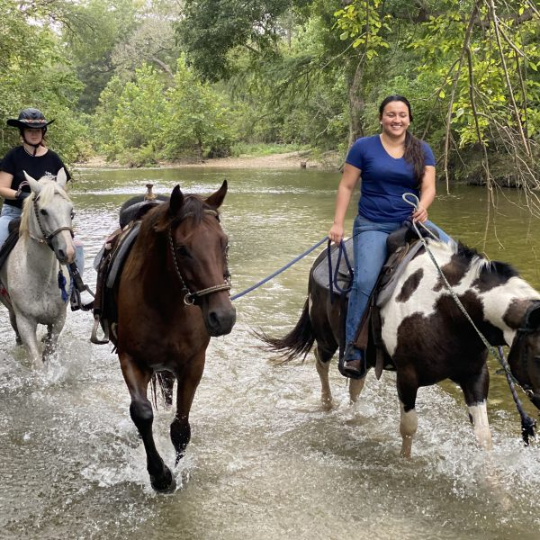 black and white paint mare leads OTTB horse in training in the water in onion creek park, Austin